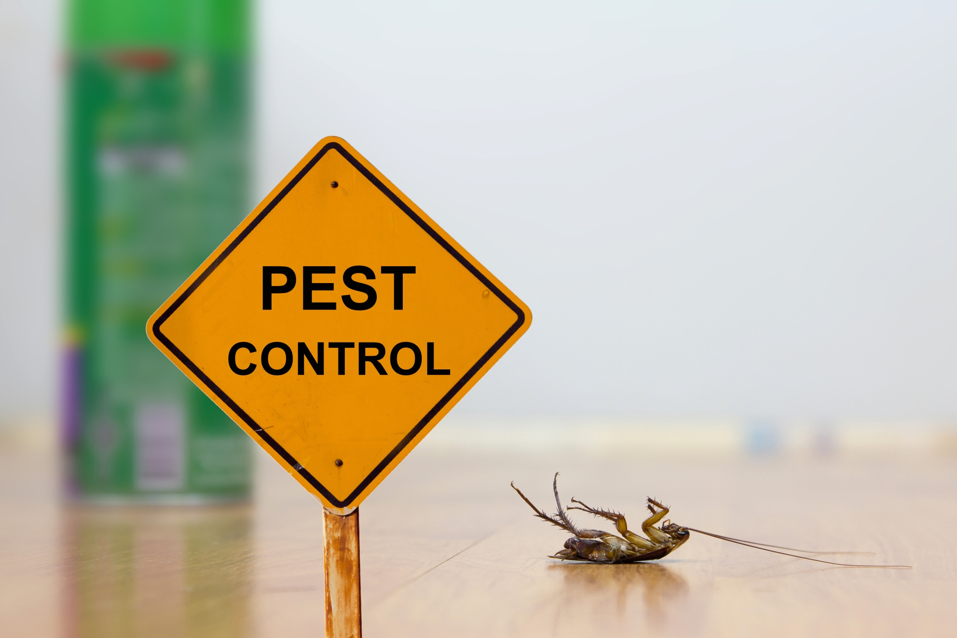 24 Hour Pest Control, Pest Control in Cheshunt, Waltham Cross, EN8. Call Now 020 8166 9746