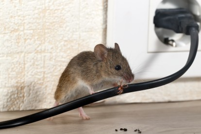 Pest Control in Cheshunt, Waltham Cross, EN8. Call Now! 020 8166 9746